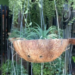 coconut hanging basket planter
