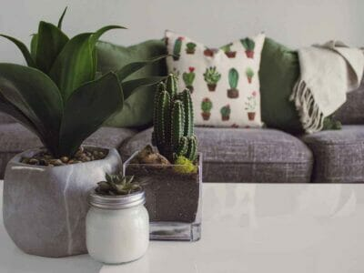 benefits of indoor plants