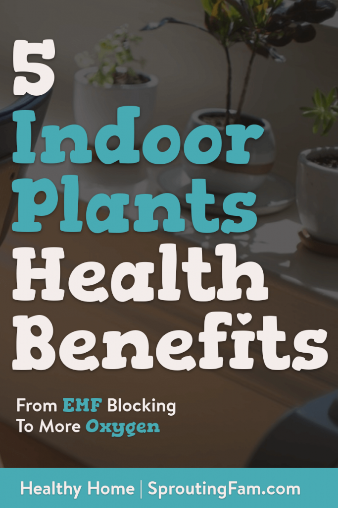 indoor plants health benefits