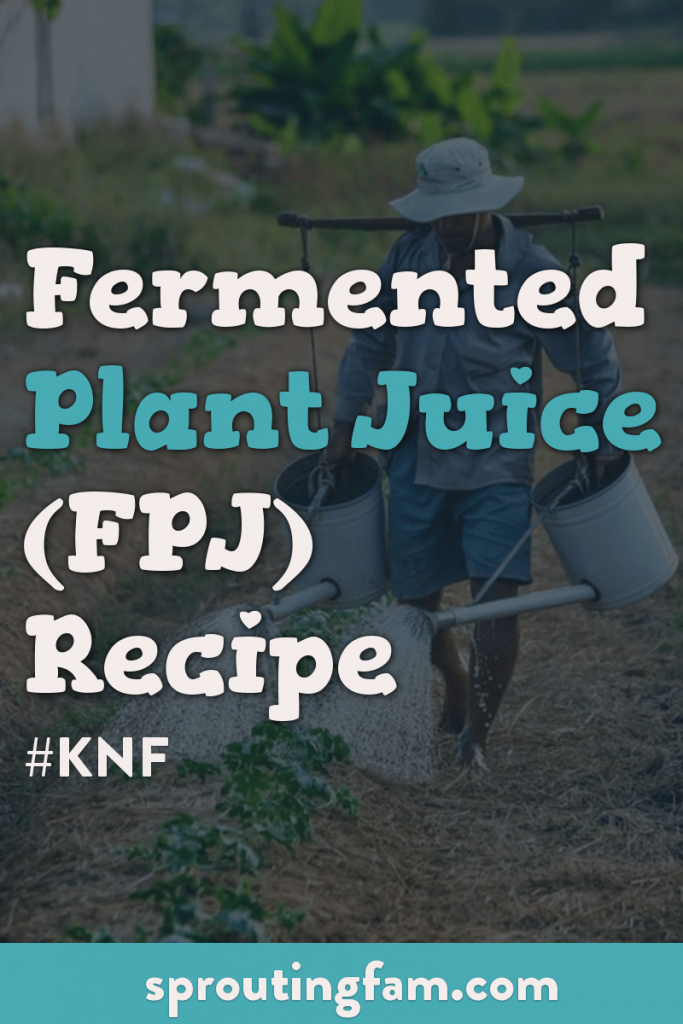 fermented plant juice recipe