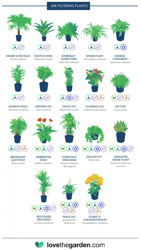 Love The Garden infographic from NASA Air Filtering Plants study
